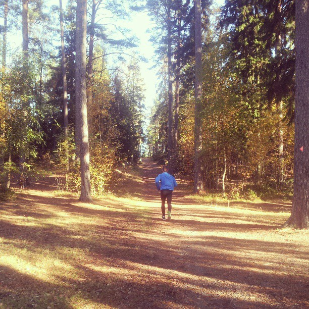 Finaste skogsstigen