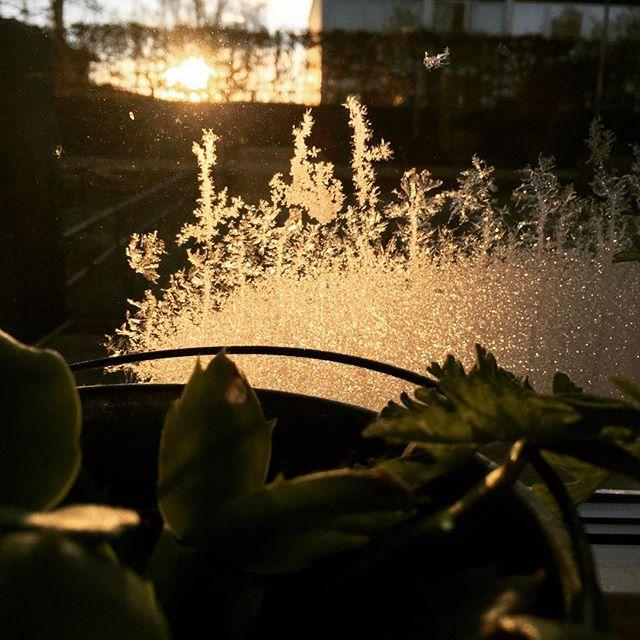 frostfönster